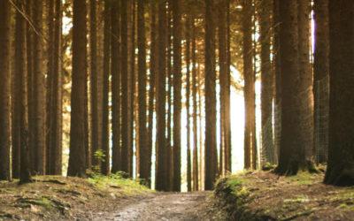 Uma perspectiva anglicana do Tempo da Criação